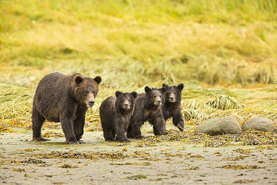 Brown Bear Photograph - A Large Family by Tim Grams