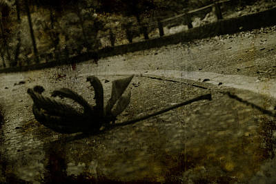 A Leaf By The Way Art Print by Valmir Ribeiro