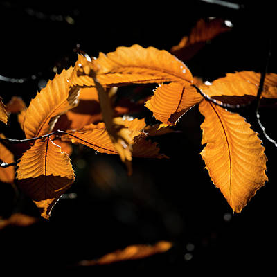 Photograph - A Leaf In The Forest by Edgar Laureano