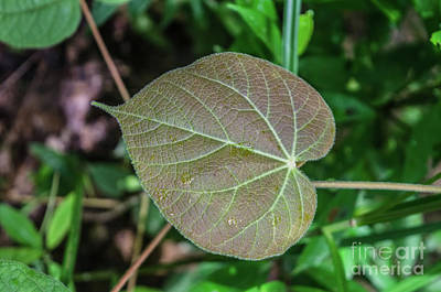 Photograph - A Leaf In The Jungle by Michelle Meenawong