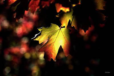 Photograph - A Leaf by Leland D Howard