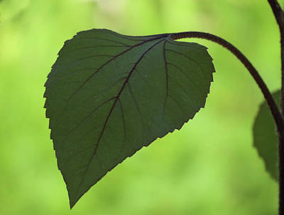 Photograph - A Leaf by MTBobbins Photography