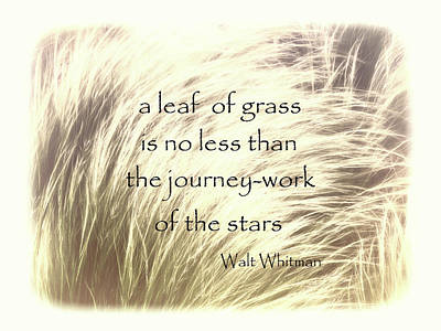 Photograph - A Leaf Of Grass Walt Whitman Quote by Ann Powell