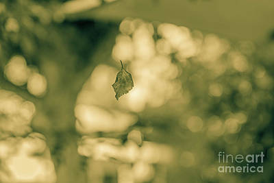 Photograph - A Leaf's Performance by Konstantinos Chatziamallos