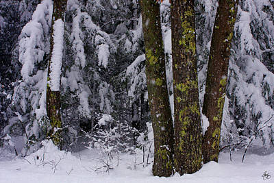 Photograph - A Lichen To Oak by Wayne King
