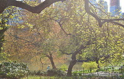 Photograph - A Light And Airy Place - Central Park In Spring by Miriam Danar