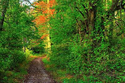 Photograph - A Light In The Forest - Fair Hill Nature Center At Foxcatcher Farms - Cecil County, Md by Michael Mazaika