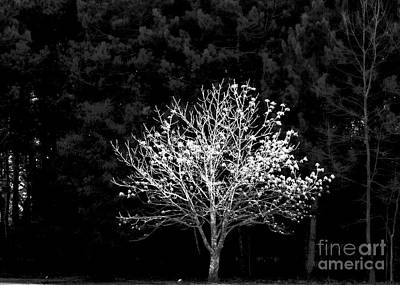 Photograph - A Light In The Forest by Marcia Lee Jones