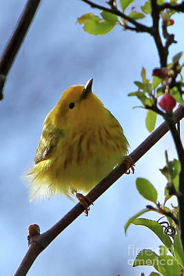Photograph - A Liitle Yellow Puff Ball by Marle Nopardi