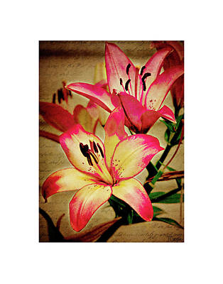 Photograph - A Lily For Benjamin by Tonya Cooper