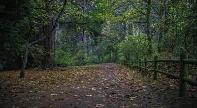 Photograph - A Lincoln Park Autumn by Ken Stanback