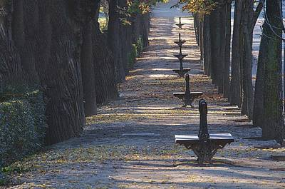 Photograph - A Line Of Lonely Benches by David Resnikoff