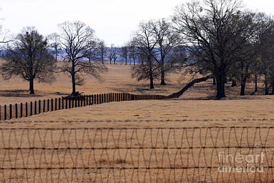Fence Row Photograph - A Lined Pasture by Joy Tudor