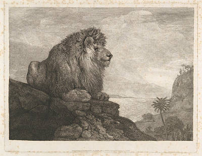 Drawing - A Lion Resting On A Rock by George Stubbs