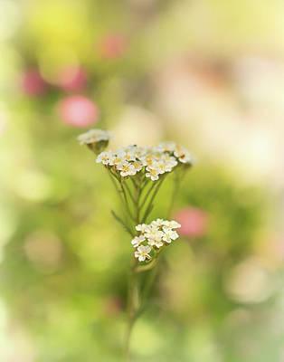 Photograph - A Little Beauty  by Marnie Patchett