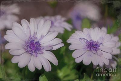 Photograph - A Little Bit Of Lavender - Horizontal by Teresa Wilson
