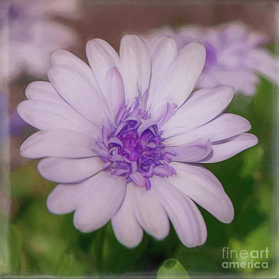 Photograph - A Little Bit Of Lavender - Square by Teresa Wilson
