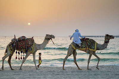 A Little Boy Stares In Amazement At A Camel Riding On Marina Beach In Dubai, United Arab Emirates Art Print