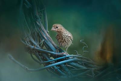 Siskin Photograph - A Little Brown Bird On A Little Blue Wreath by Jai Johnson