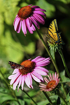 Photograph - A Little Butterfly Competition by Diane Schuster