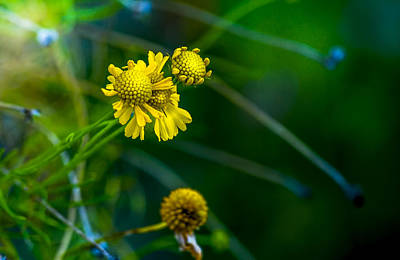 Florida Flowers Photograph - A Little Cheerfulness by Marvin Spates
