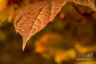 Lisa Phillips Photograph - A Little Closer by Lisa Phillips