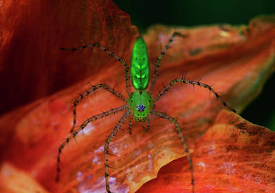 Photograph - A Little Creepy Crawler by Mike Eingle