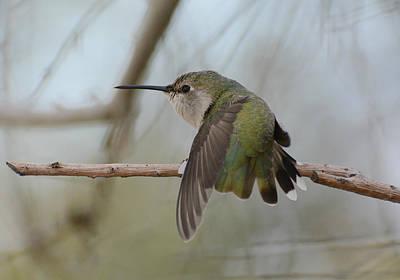 Photograph - A Little Flutter by Fraida Gutovich