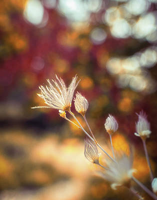 Photograph - A Little Glow by Marnie Patchett