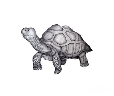 Giant Tortoise Drawing - A Little Lonely by Ella Mazur