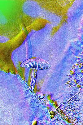 A Little Mushroom  Art Print by Jeff Swan