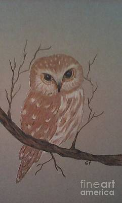 Drawing - A Little Owl by Ginny Youngblood