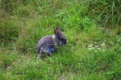 A Little Rabbit Original by Roman Pol