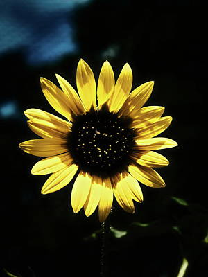 Photograph - A Little Sunshine In Darkness by Philip A Swiderski Jr