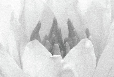 Photograph - A Little Touch Of Gray - Water Lily - Bw - Water Paper by Pamela Critchlow
