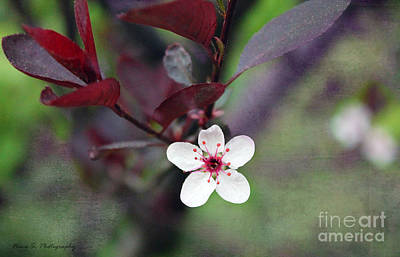 Photograph - A Little Touch Of Spring by Nina Silver