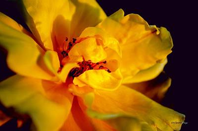 Photograph - A Little Yellow by YoursByShores Isabella Shores