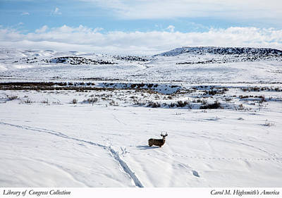Photograph - A Lone Buck Deer In Carbon County, Wyoming by Carol M Highsmith
