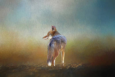 Candid Digital Art - A Lone Coyote by Linda Brody