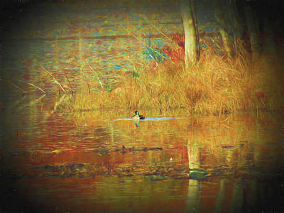 Photograph - A Lone Mallard Duck Floating In The Fall Colors. by Rusty R Smith