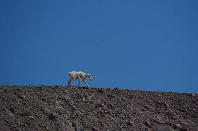 Photograph - A Lone Mountain Goat On A Ridgeline by Jeff Swan