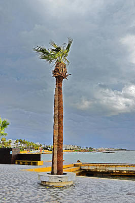 A Lone Palm Tree. Island Of Love. Original