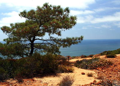 Photograph - A Lone Pine Tree At Torrey Pines In California by Laurel Talabere
