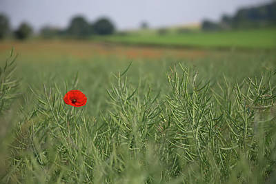 Photograph - A Lone Poppy by Peter Walkden