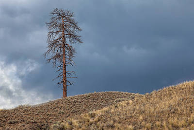 Photograph - A Lone Tree And Two Hills by Jacqui Boonstra
