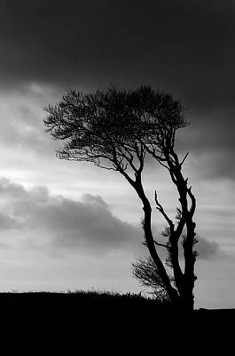 Photograph - A Lone Tree At Horns Cross by Pete Hemington