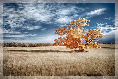A Lone Tree Art Print