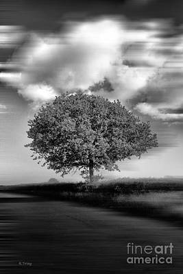 Photograph - A Lone Tree In The Meadows by Rene Triay Photography