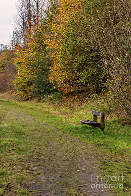 Photograph - A Lonely Seat by Steve Purnell