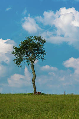 Photograph - A Lonely Tree On A Hill by Guy Whiteley